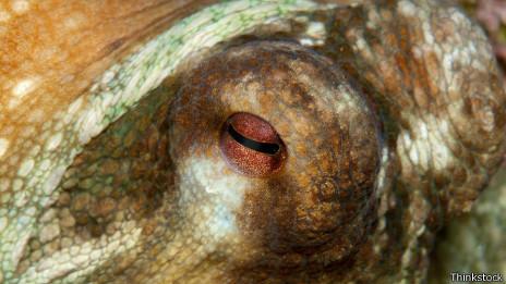 Ojo del pulpo