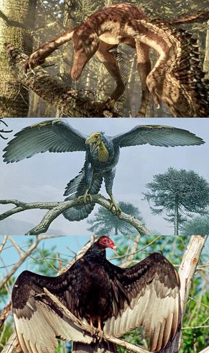 Dinosaurios a aves