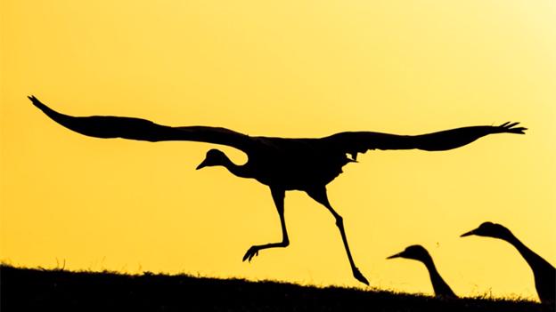 Aves dinosaurios volar