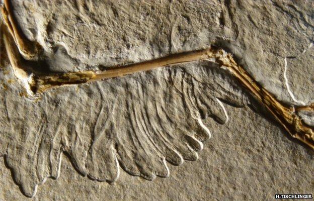 Dinosaurio plumas