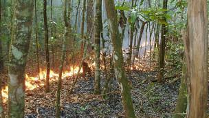 Incêndio na Amazônia (BBC)