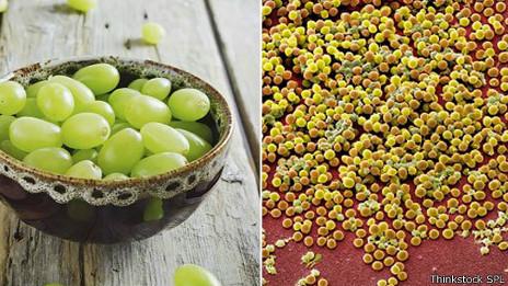 Las bacterias de estafilococo dorado pueden parecerse a las uvas
