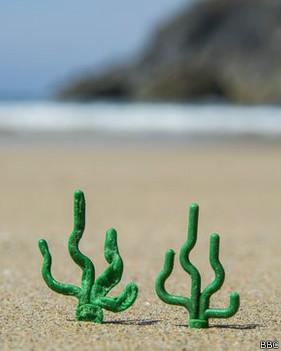 Algas de Lego en la Playa