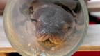 Serpiente pitón del zoo de Chester