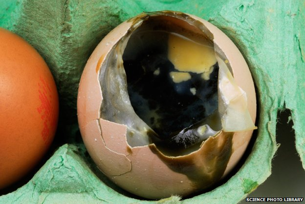 Huevos podridos