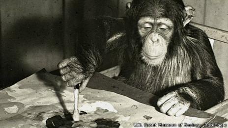 Chimpancé Congo