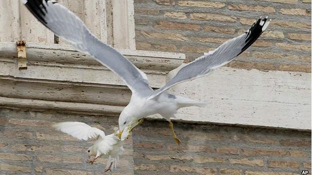 Gaviota cazando una paloma de la paz