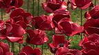 伦敦塔陶瓷罂粟花