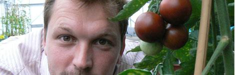 A purple tomato