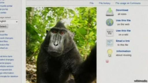 القرد صاحب السيلفي