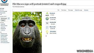 Foto de selfie de un macaco en Wikimedia