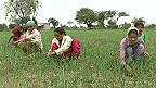 Индийские крестьянки