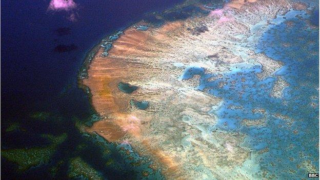 大堡礁是世界上最大的珊瑚群