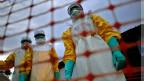 इबोला संकट