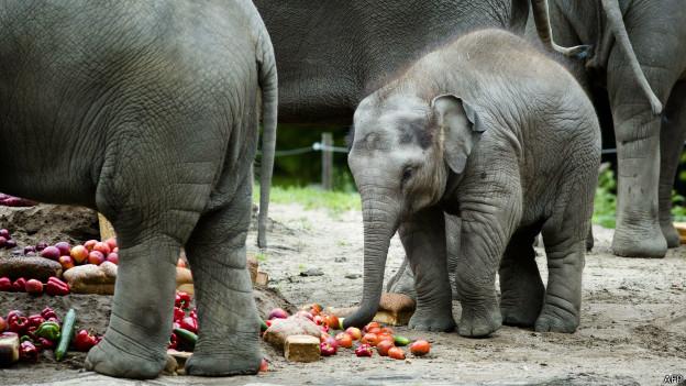 Elefante | AFP