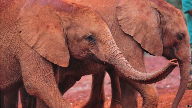 世界上最大的哺乳动物在非洲大陆的