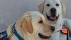 Cães do Serviço Penitenciário Argentino