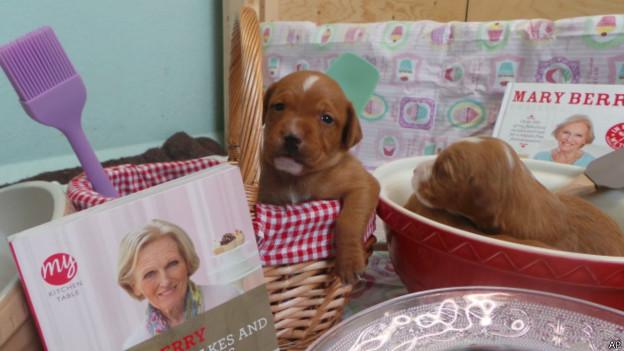 Mascotas llamadas Mary Berry