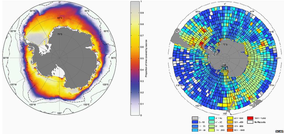 Mapa de especies antárticas