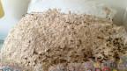 Ninho de vespas (Longwood Services Pest Control)