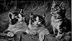 Изображение из коллекции Internet Archive