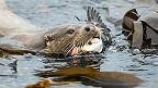 英国野生动植物摄影大奖 - 水濑,摄影人Richard Shucksmith