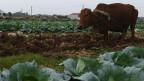 Ruộng đất Việt Nam