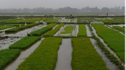 Đồng ruộng Việt Nam