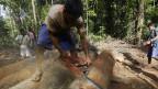 illegal logging penebangan liar