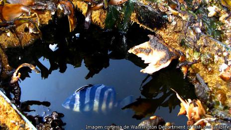 El pez en su ecosistema