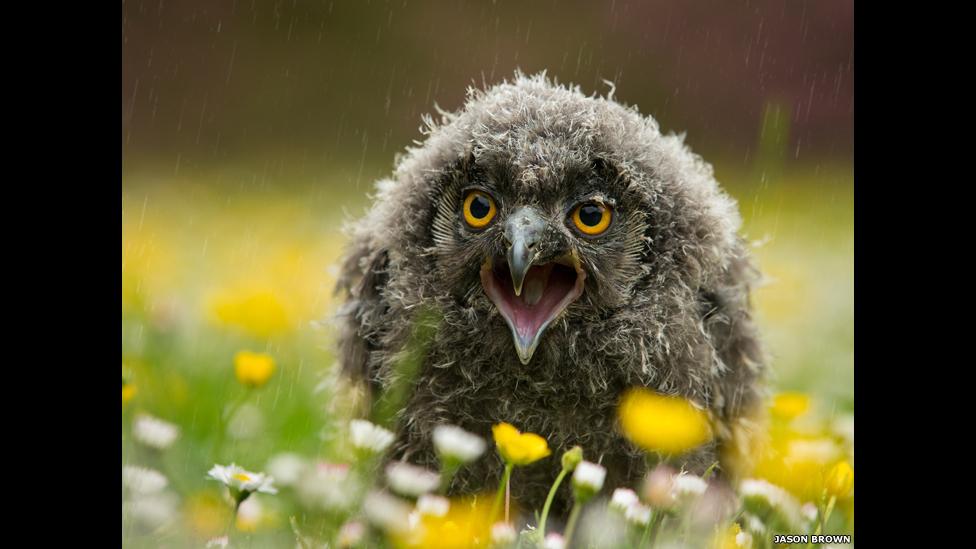 图辑:伦敦动物学协会摄影大赛获奖作品