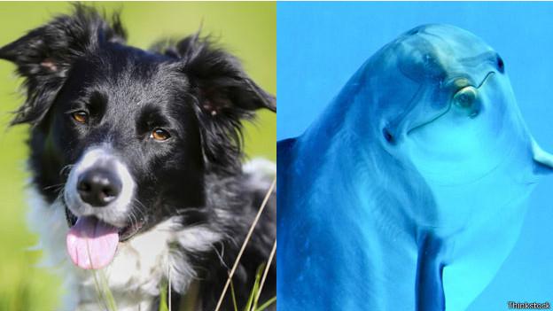 Un perro y un delfín