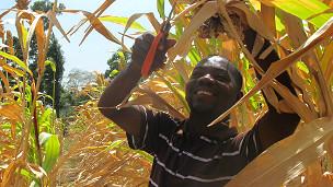 Del baño a la mesa: cultivar vegetales con abono humano