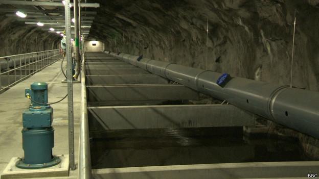 Túnel de cloaca