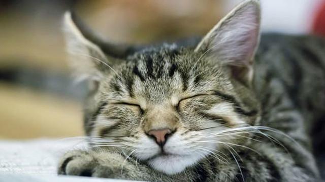 Động vật nằm mơ thấy gì?