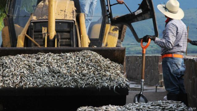 Ikan mati Meksiko