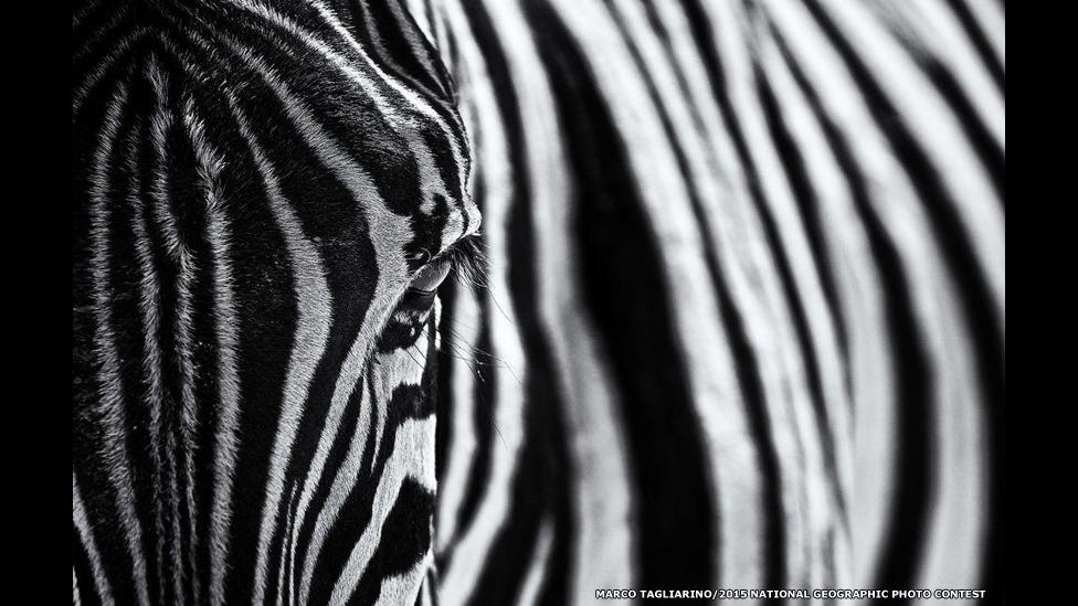 Foto: Marco Tagliarino