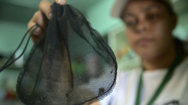 Una mujer sostiene una bolsa con mosquitos Aedes Aegypti, transmisores del zika.