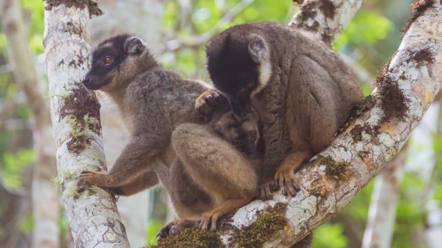 Dos monos con su cría