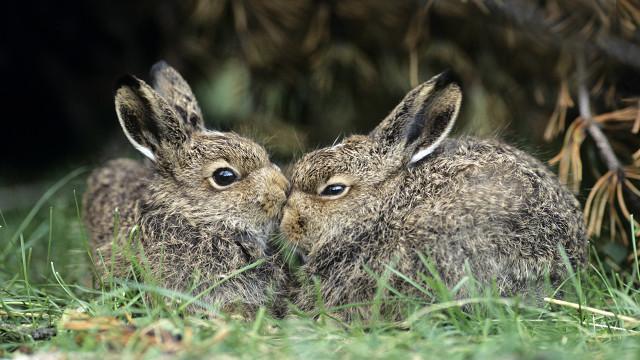 Animales que son todav a m s f rtiles que los conejos la opini n - Como se aparean los elefantes ...