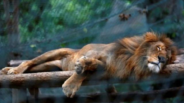 Động vật chết đói ở Venezuela