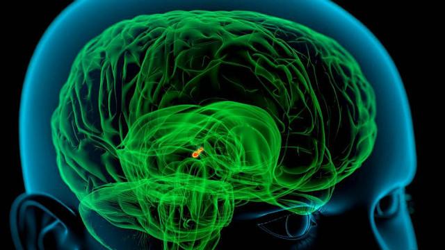 د ځوانۍ پر مهال د انسان مغز څنګه پرمختګ کوي؟