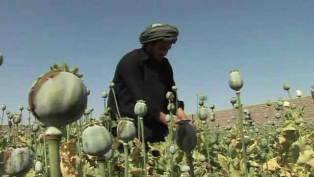 160829165148_opium_cultivation_640x360_bbc_nocredit