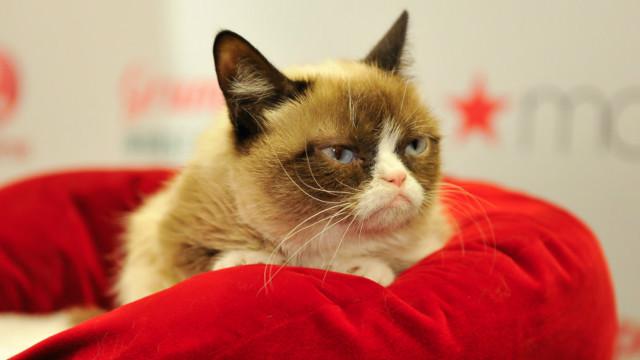 Kenapa Kucing Suka Bersembunyi Dalam Kardus Bbc News Indonesia